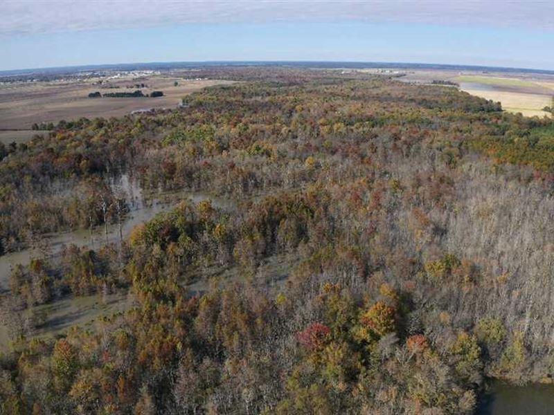 320 Acres, Duck & Deer Hunting : Newport : Jackson County : Arkansas