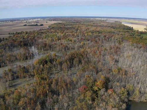 320 Acres, Duck & Deer Hunting : Newport : Jackson County : Arkansas
