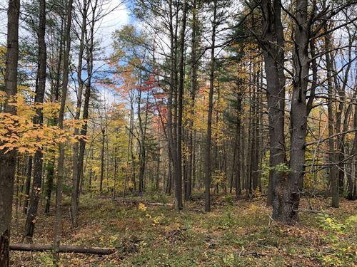Near Black River : Watson : Lewis County : New York