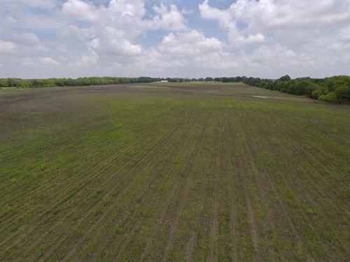 Bayou Deview Conservation Tract : Hickory Ridge : Cross County : Arkansas