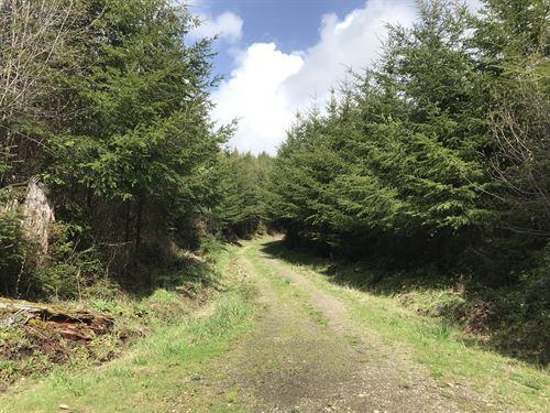 Hunter Ranch Road : Elma : Grays Harbor County : Washington