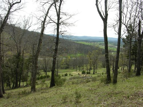Pasutre & Wooded Land, Hwy 62 : Berryville : Carroll County : Arkansas