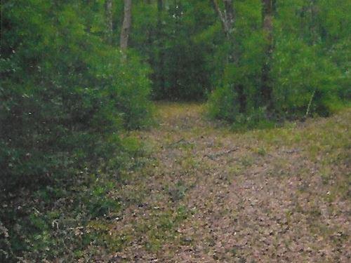 Land For Sale in Florida : Monticello : Jefferson County : Florida