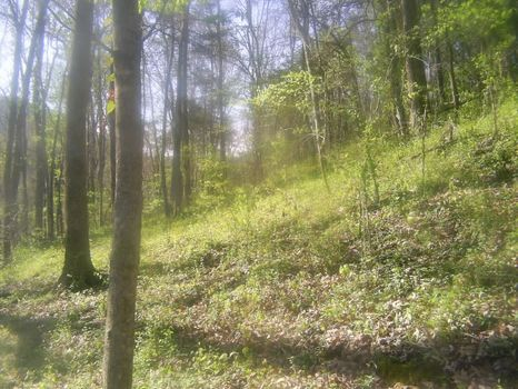 2.8 Acres For Sale : Gainesboro : Jackson County : Tennessee