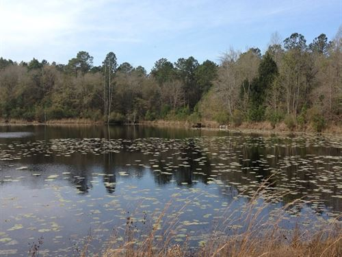 Oliver Pond Tract : Reidsville : Tattnall County : Georgia