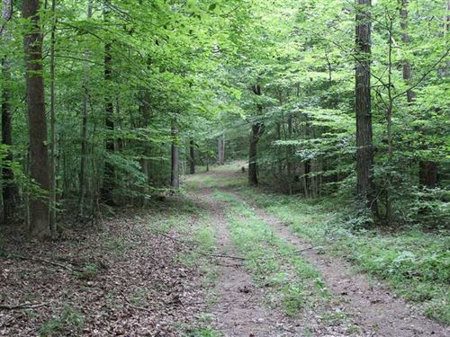 189.42 Gorgeous Wooded Acres in As : Ashland City : Cheatham County : Tennessee