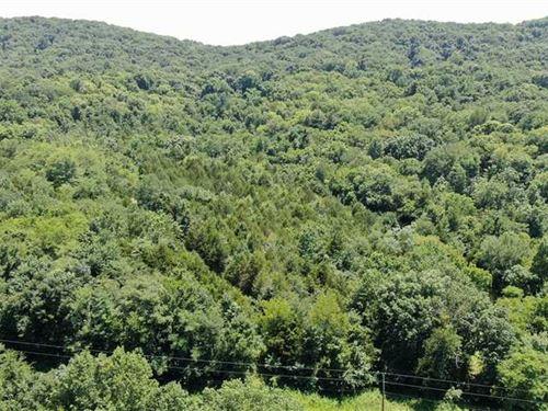 36.80 Acres, Nolensville, TN Beau : Nolensville : Williamson County : Tennessee