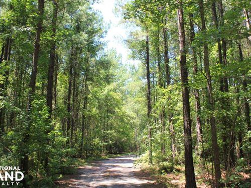 Ridgeville Large Acreage : Ridgeville : Dorchester County : South Carolina