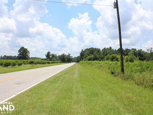 Santee Area Large Acreage Investmen : Holly Hill : Orangeburg County : South Carolina
