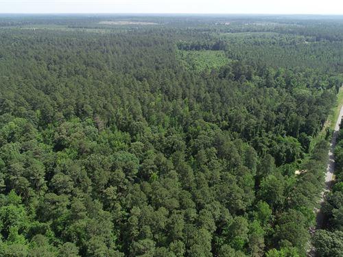 Pine Timberland Camp/Home Site : El Dorado : Union County : Arkansas