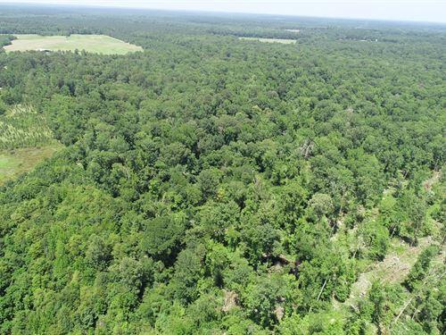 Hardwood Creek Bottom Land West El : El Dorado : Union County : Arkansas