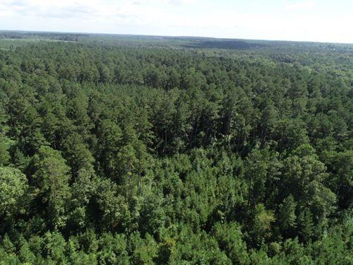 Natural Pine Timber Land Union CO : El Dorado : Union County : Arkansas
