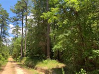 Recreational Pine Timber Land MT : Mount Holly : Union County : Arkansas