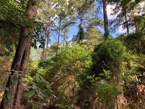 Merchantable Pine Timberland Union : Smackover : Union County : Arkansas