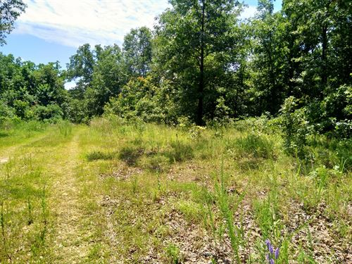 Wooded Acreage Partially Finished : Climax Springs : Camden County : Missouri