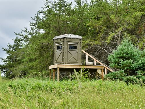 Hunting Property, 70 Acres Hawks : Hawks : Presque Isle County : Michigan