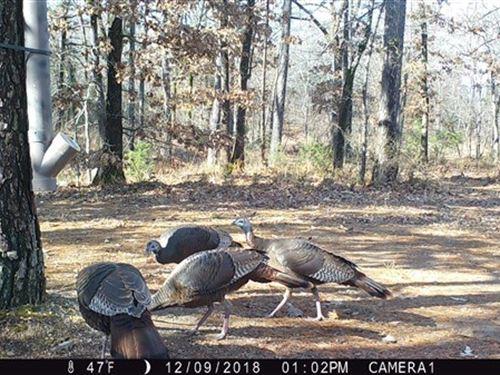 107.5 Acres Hunting Land Sans Bois : Red Oak : Latimer County : Oklahoma