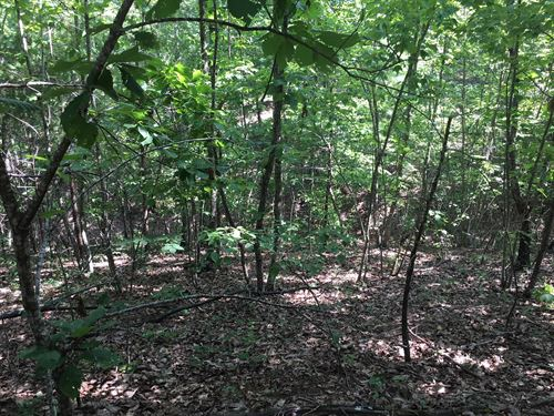 30.52+/- Private Acres : Cedartown : Polk County : Georgia