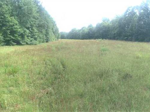 Open Land And Hardwood : Mooreville : Lee County : Mississippi