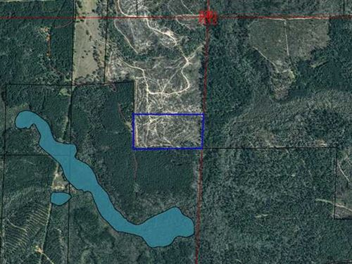 Two Parcels Totaling 100 Acres-Cla : Clayton : Barbour County : Alabama