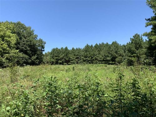 Big Mingo Creek Pine Plantation : Bald Knob : White County : Arkansas