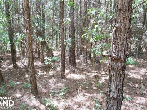 Marion Timber Investment And Huntin : Marion : Perry County : Alabama