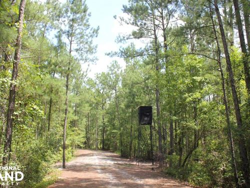 Suttons Hunting And Timber Investme : Suttons : Williamsburg County : South Carolina