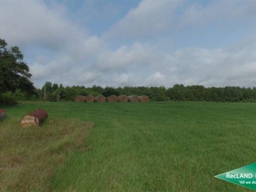 40 Ac, Small Ranch Near Rosepine : Rosepine : Vernon Parish : Louisiana
