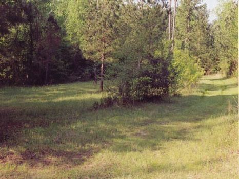 271.5 Acres : Dry Branch : Twiggs County : Georgia