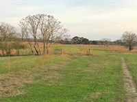 McLean Road Cattle Farm : Clio : Barbour County : Alabama