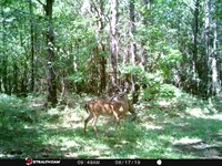 Secluded Hunting Land Greenville : Greenville : Butler County : Alabama