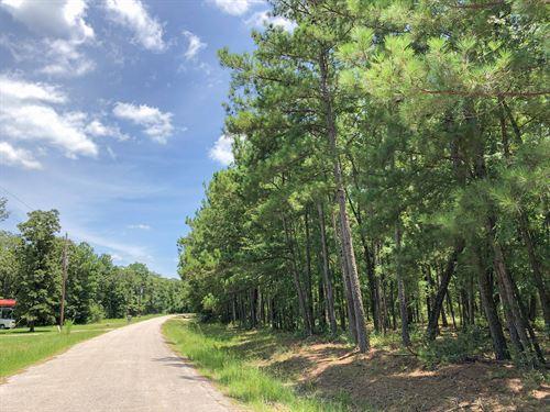 2.34 Acres Erin Dr : Huntsville : Walker County : Texas