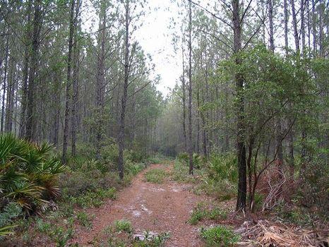 Close to the Altamaha - $1,695/Acre : Jesup : Wayne County : Georgia