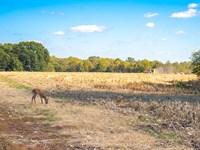 Pike County Illinois Farm Hunting : Pleasant Hill : Pike County : Illinois