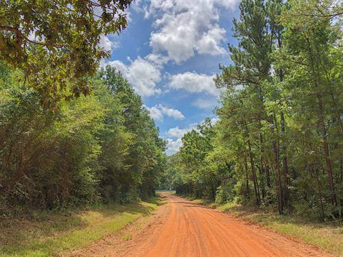 27 Ac Cr 4223 & Fm 2064 Tract B : Jacksonville : Cherokee County : Texas