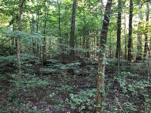 55 Acres / Recreation / Hunting : Saint Leon : Ripley County : Indiana
