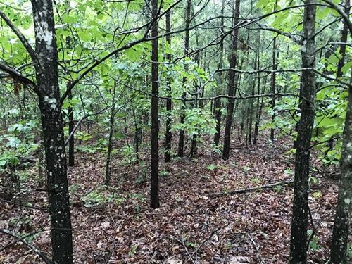 20-Acres of Fantastic Hunting : Shirley : Van Buren County : Arkansas