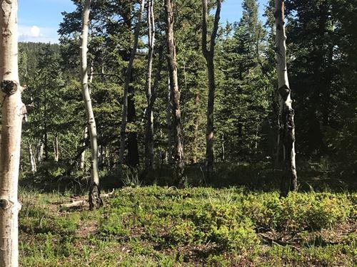 Mountain Land Close to National : Divide : Teller County : Colorado