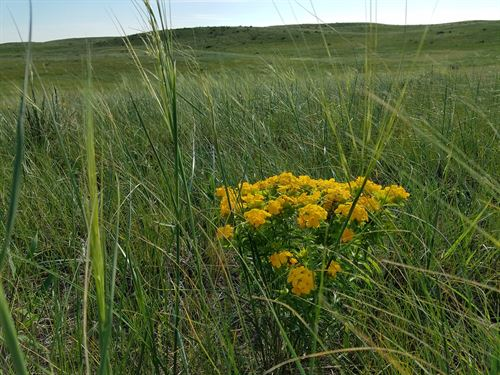 560+/- Acres Holt County, Ne : Ewing : Holt County : Nebraska