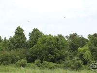 Buy This Land And Start a New Life : Huntsville : San Jacinto County : Texas