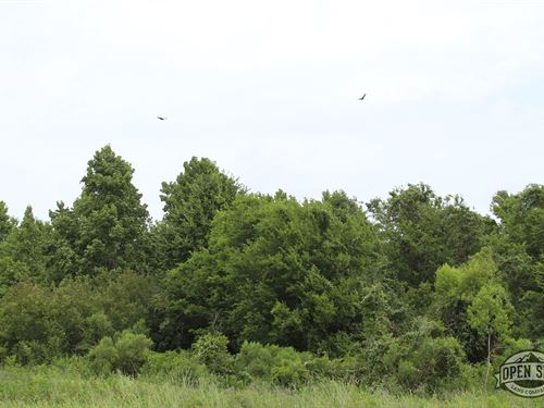Buy This Land And Start a New Life : Huntsville : San Jacinto County : Texas
