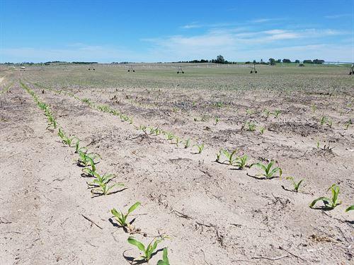 320+/- Acres In Holt County, Ne : Ewing : Holt County : Nebraska