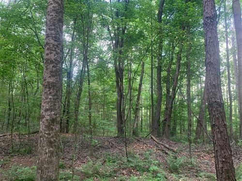 160 Acre Mature Pine Plantation WI : Vina : Franklin County : Alabama