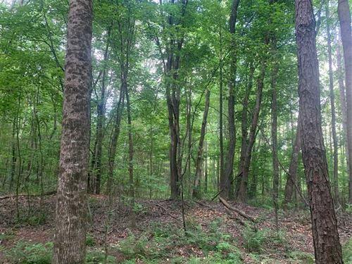 160 Acre Mature Pine Plantation WI : Vina : Franklin County : Alabama