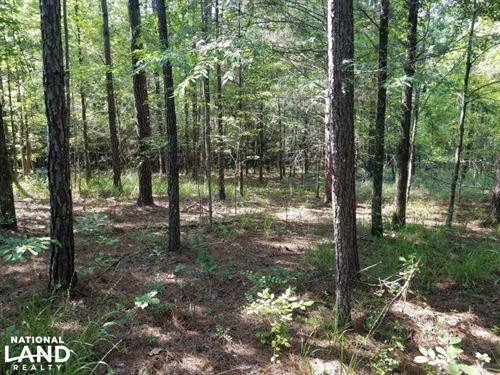 Worrell Rd Hunting Tract : Utica : Hinds County : Mississippi