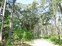 Wilson Irrevocable Trust Tract : Littleton : Halifax County : North Carolina