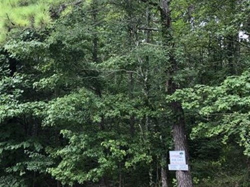 35+/- Wooded Acres Cleburne Co : Heflin : Cleburne County : Alabama