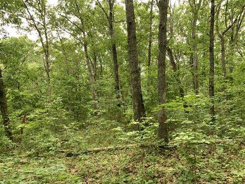 Great Laying Mature Timber Hunting : Versailles : Morgan County : Missouri