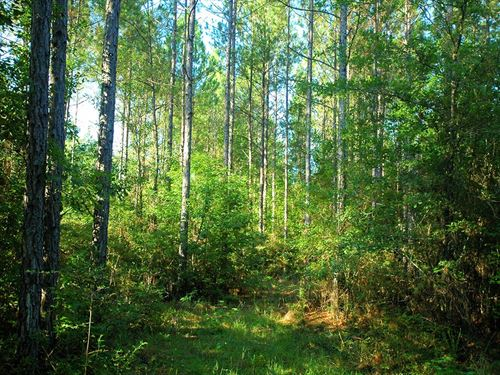 96 Acres Springhill Church Rd : Gordon : Houston County : Alabama