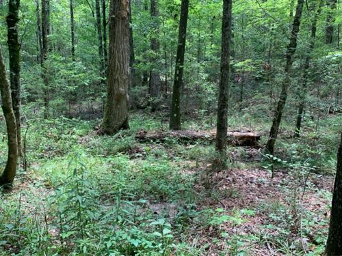 12 Acres In Lawrence County On Roan : Monticello : Lawrence County : Mississippi